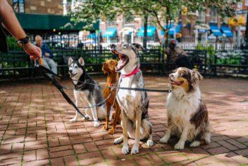 Hundehalterhaftpflichtversicherung Magdeburg