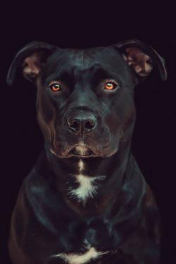 Listenhund Hundehaftpflichtversicherung